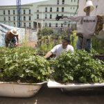 Comunidad La Esperanza: el experimento libertario en Gran Canaria